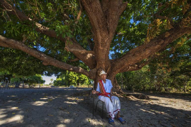 à madagascar, la fondation yves rocher s'associe aux communautés pour planter des arbres et préserver les lémuriens
