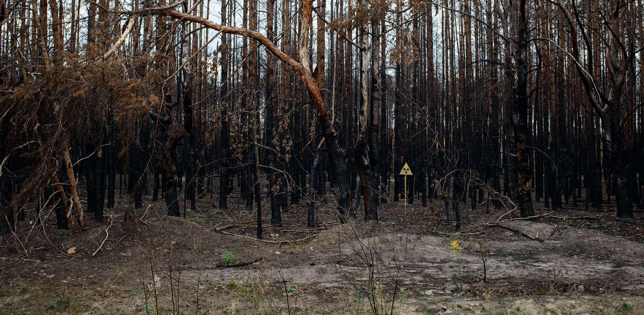 Guillaume Herbaut, reforestation en Europe de l'Est, mission photographique