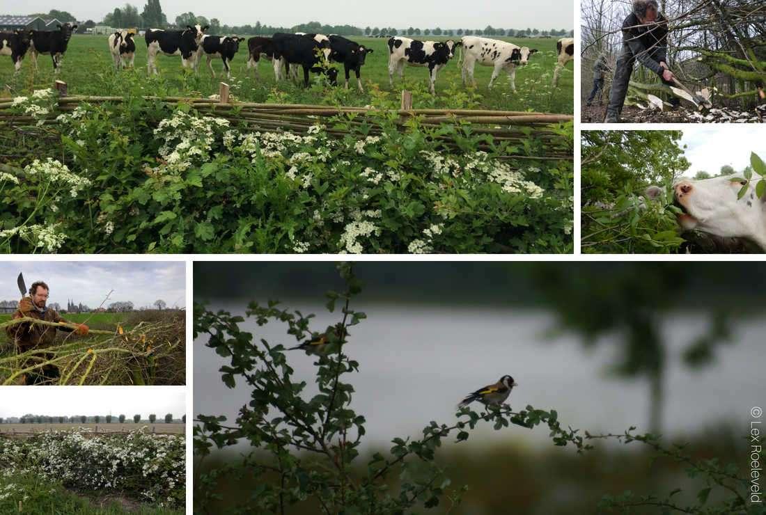 Lex Roeleveld planteur d'arbres champêtres au Pays-Bas avec la Fondation Yves Rocher