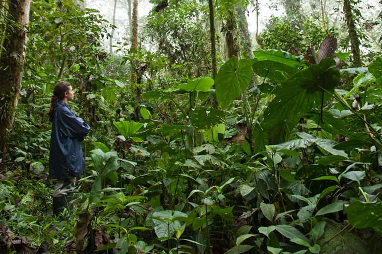 Envol vert forêt tropicale pérou