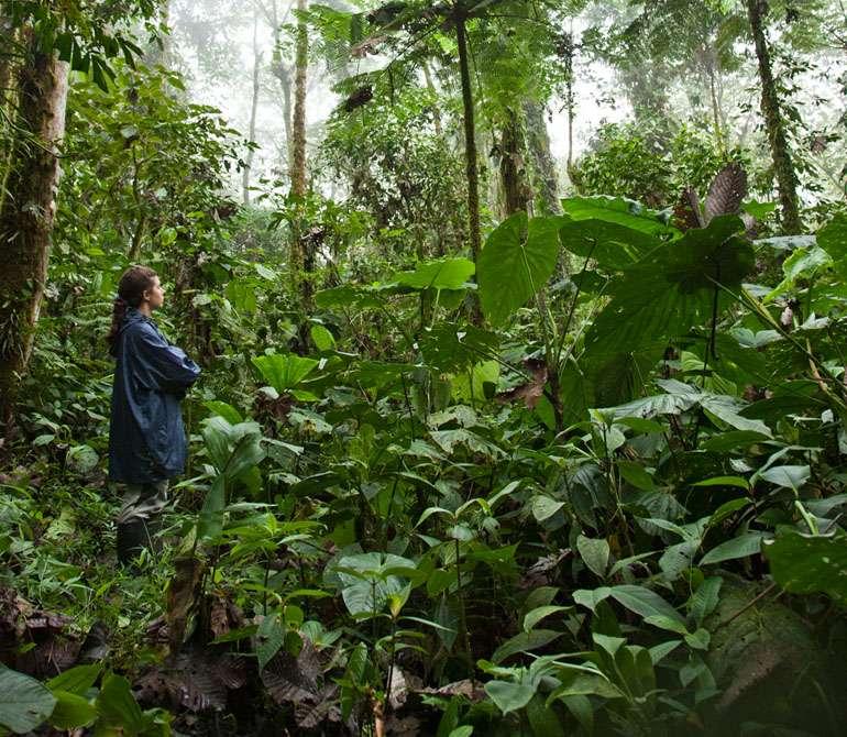 envol vert rainforest peru