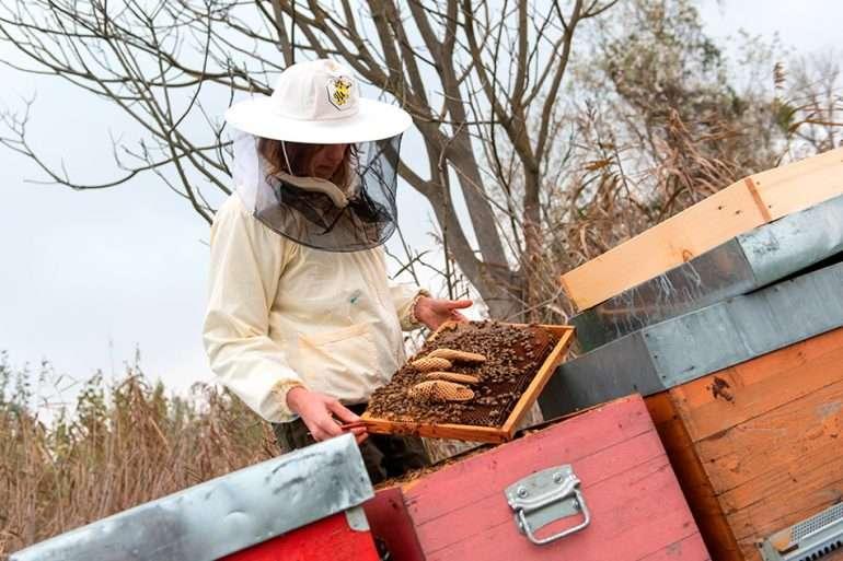 debora rizzetto abeilles