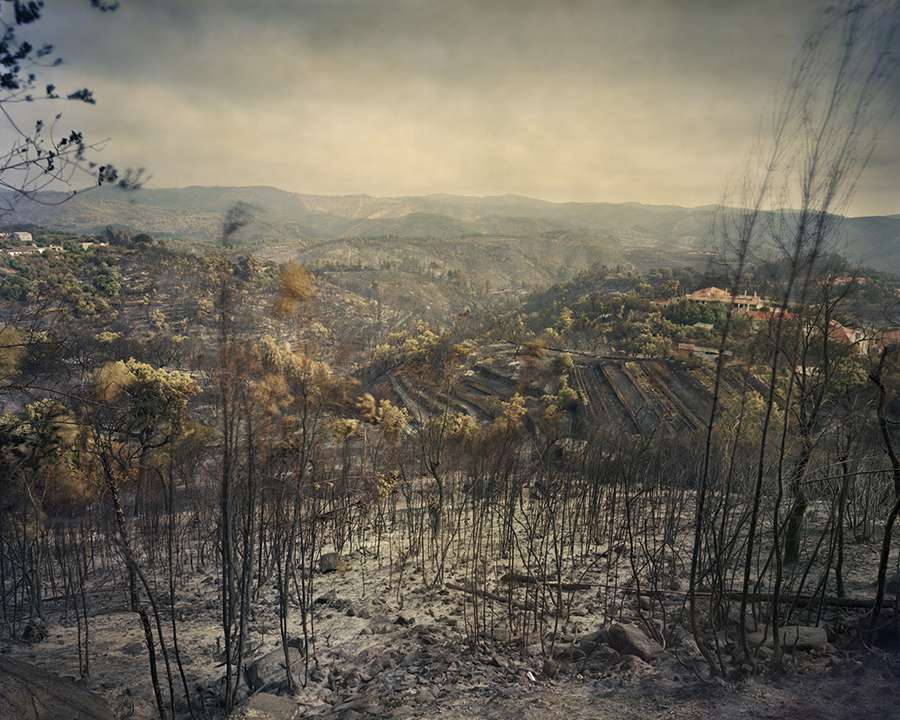 Feux de forêts et eucalyptus, un drame écologique au Portugal relaté par Juan Manuel Castro Prieto