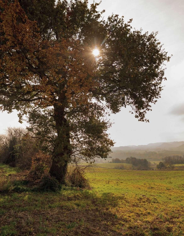 arbre sur le domaine de rémy estavil