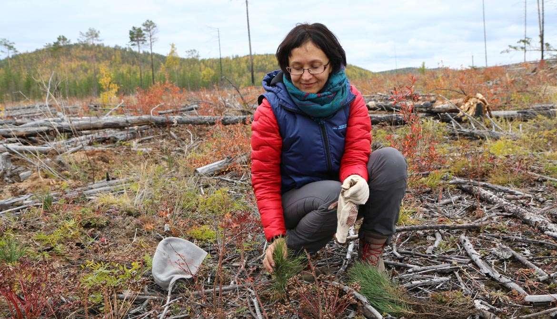 Natalya Eremeeva forêt russie