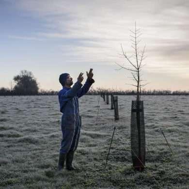Phil Hatcher-Moore : Un agriculteur en biodynamie replante des haies pour recréer un bocage