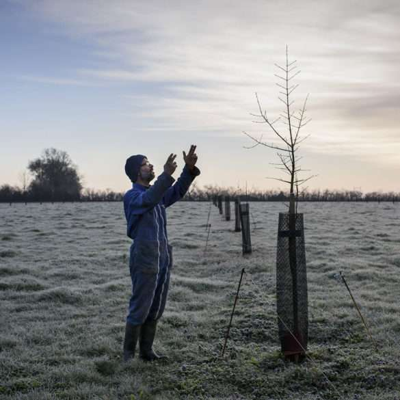 Phil Hatcher-Moore: a biodynamic farmer replanting hedgerows to recreate wooded countryside
