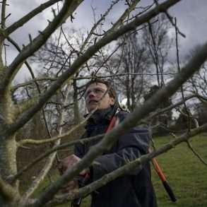 Phil Hatcher-Moore : replanter des arbres fruitiers près de Niort en France