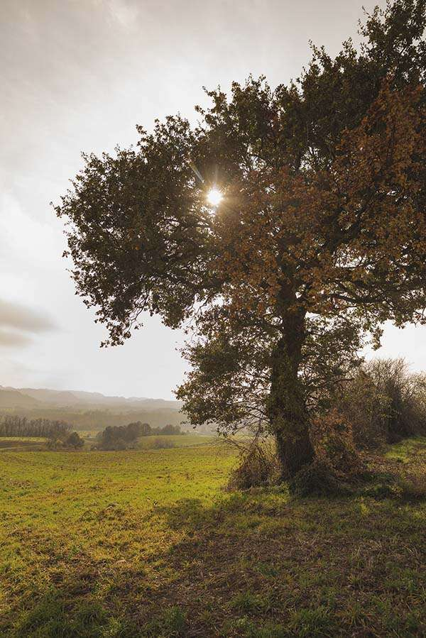Plantation d'arbres Valence Fondation Yves Rocher