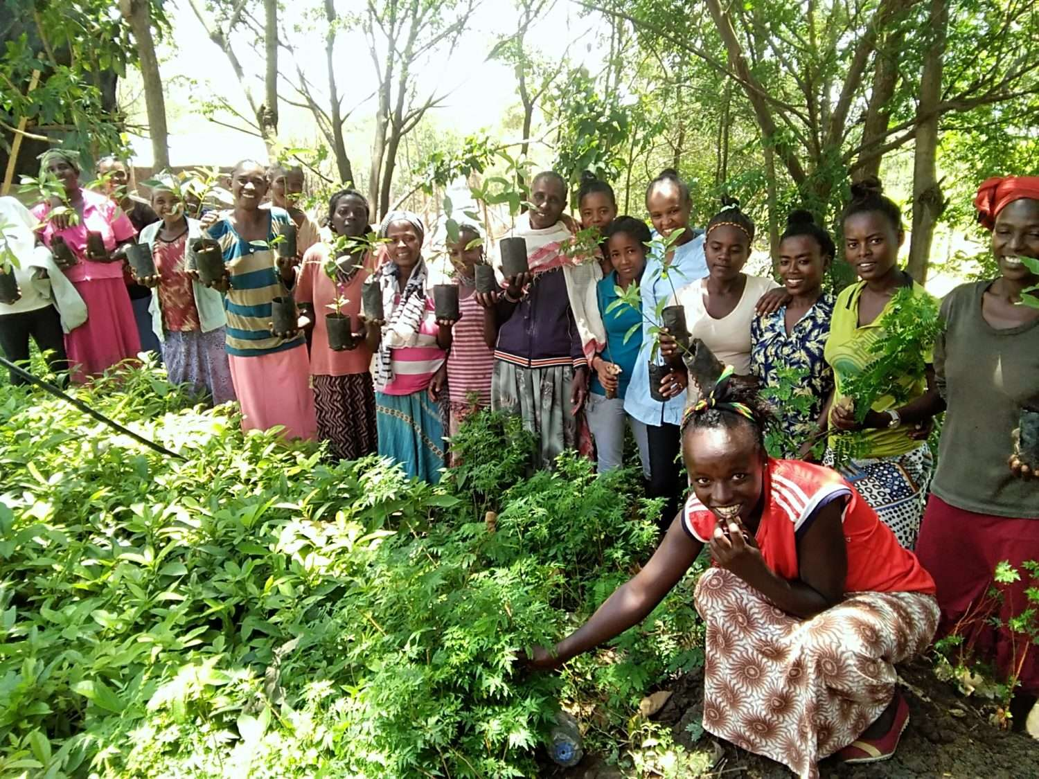 Axelle de Russé agro-forestry fertilising trees in Togo with the APAF
