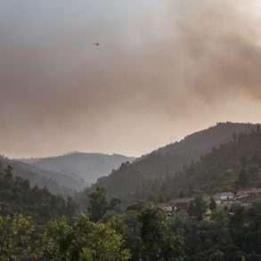 Feux de forêts au sud du Portugal et eucalyptus, un drame écologique au Portugal relaté par Juan Manuel Castro Prieto