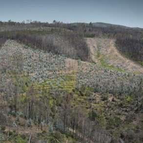 Incendies de forêts au Portugal et eucalyptus, une mission photographique de Juan Manuel Castro Prieto