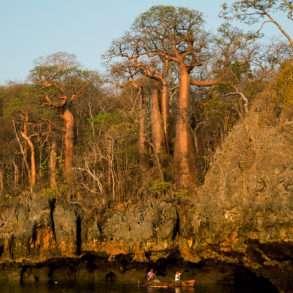Soutien photographe, Pascal Maitre, un monde de baobabs en danger Madagascar