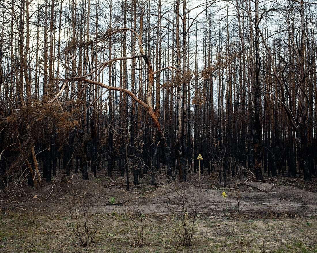 Mission photographique Guillaume Herbaut forêt radioactive à Tchernobyl