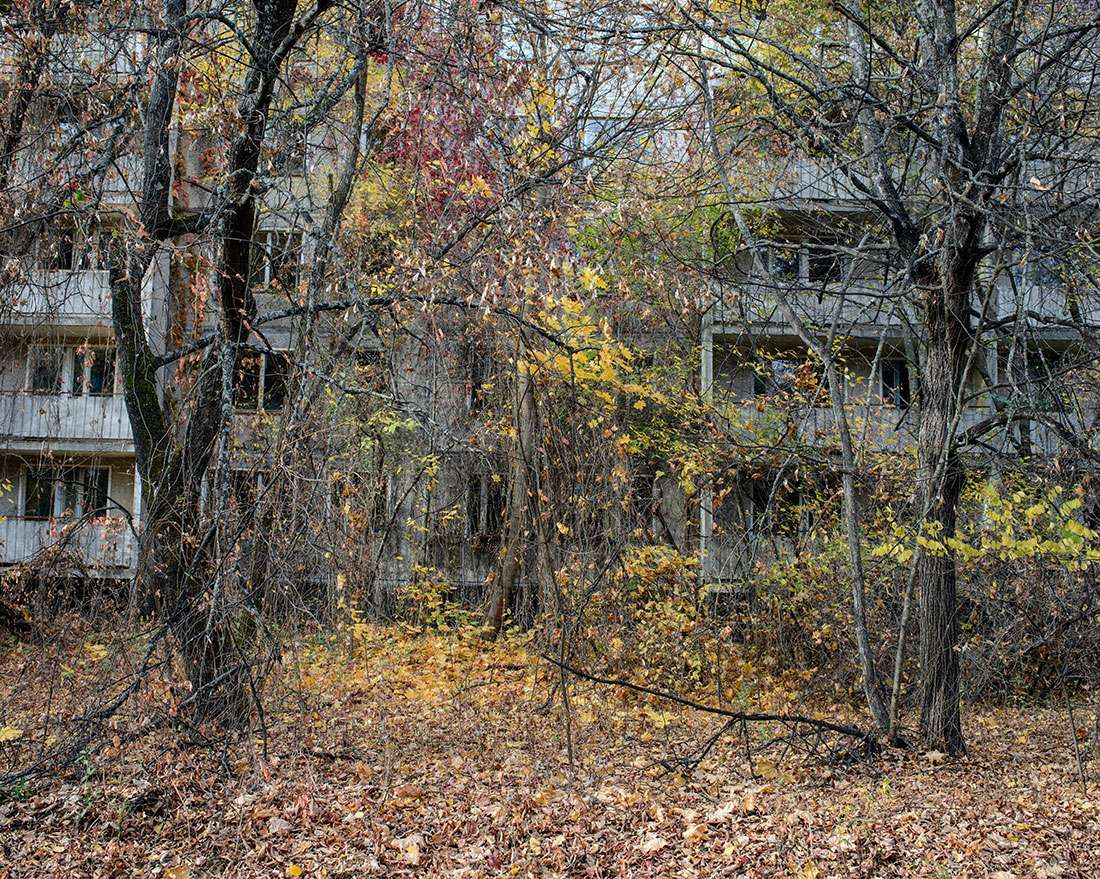 Forêt Techernobyl et contamination des sols Guillaume Herbaut Mission photographique Fondation Yves Rocher