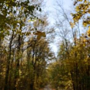 Forêt du parc naturel de Comana, au sud de Bucarest, un espace protégé une mission photographique Guillaume Herbaut