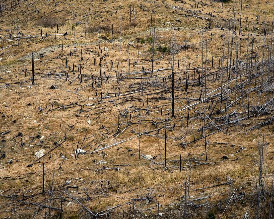 Roumanie, coupes d'arbres illégales un reportage de Guillaume Herbaut