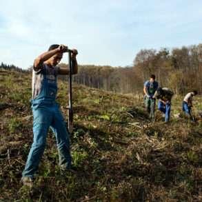 Jardiner parmi les jeunes arbres replantés en Europe de l'Est grâce à la Fondation Yves Rocher