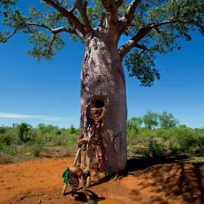 outien photographe, Pascal Maitre, un monde de baobabs en danger Madagascar
