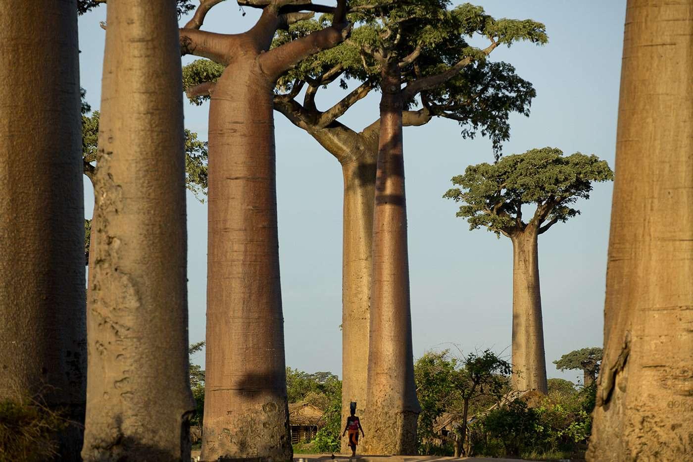 Soutien photographie, reportage Pascal Maitre, Madagascar