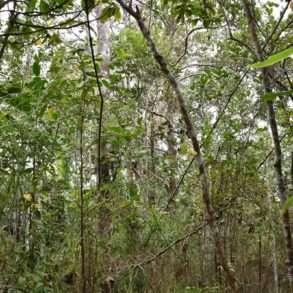 expédition dans les Îles Robinsons, Chili, dans une réserve biosphère