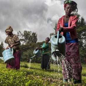 Brent Stirton : En Ethiopie les paysannes replantent des arbres pour reforester.