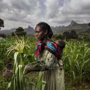 Brent Stirton : replanter en Ethiopie pour un sol plus fertile et vivant.