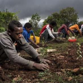 Brent Stirton : reconquête d'une zone forestière en Ethiopie.
