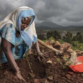 Brent Stirton : Les paysans et les paysannes replantent des arbres avec les mains en Ethiopie