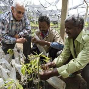 Brent Stirton : la Fondation Yves Rocher aux côtés de la Fondation Green Ethiopia, ensemble pour la reforestation en Inde.