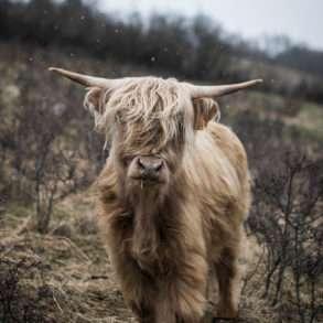Phil Hatcher-Moore : Sylvie Monier lauréate Terre de Femmes et éleveuse de Highland et planteuse d'arbres en Auvergne.