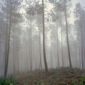 Juan Manuel Castro Prieto Portugal exploitation intensive pins eucalyptus