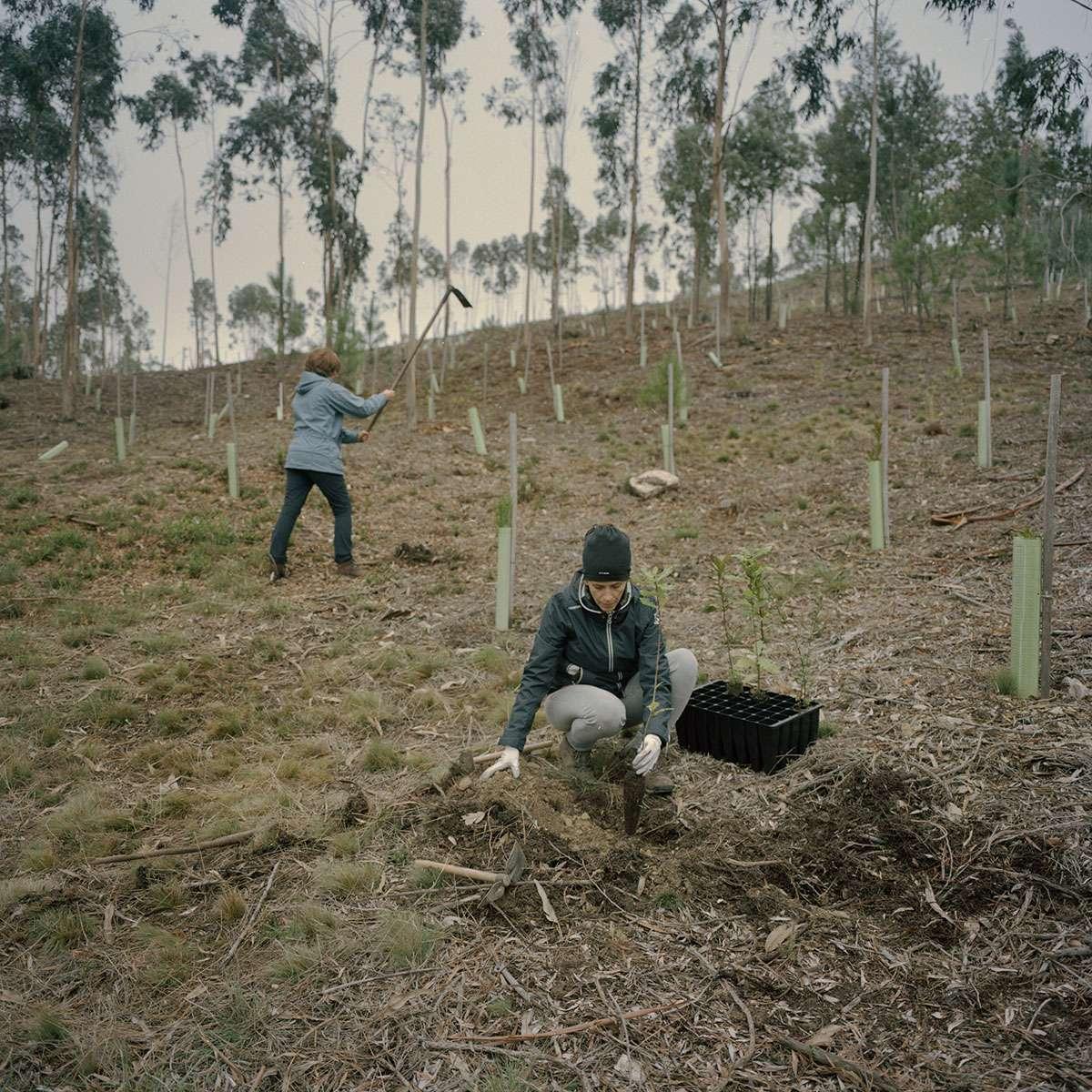 Un réseau forestier Nature 2000 au Portugal préservé par l'association Futuro et la Fondation Yves Rocher, mission photo Juan Manuel Castro Prieto