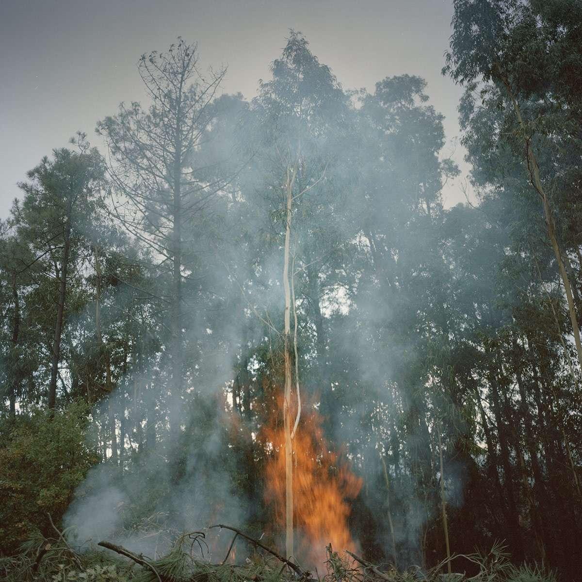L'activité papetière est importante au Portugal. Eucalyptus et feux de forêts, une mission photographique de Juan Manuel Castro Prieto