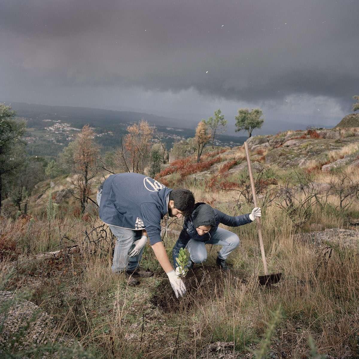 Plans en pépinières en vue de la reforestation au Portugal avec l'association Futuro et la Fondation Yves Rocher. Un reportage photographique Juan Manuel Castro Prieto
