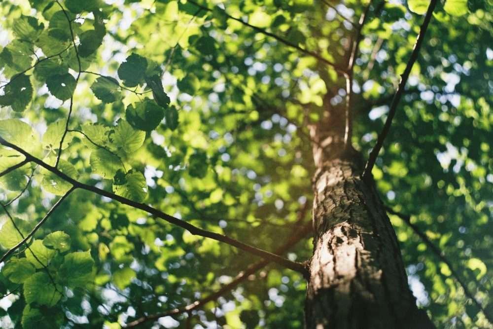 Photo d'un arbre