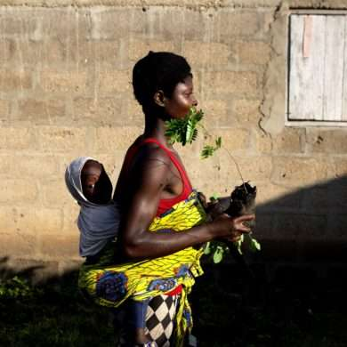 In togo, families plant fertility trees thanks to the Yves Rocher Foundation
