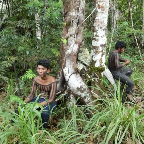 Amazonie et déforestation, le combat des populations