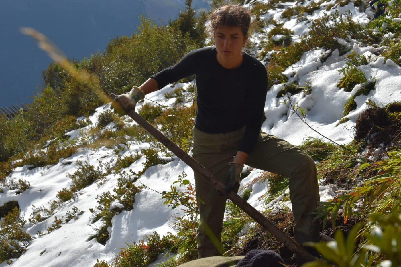 reforestation en foret de montagne suisse