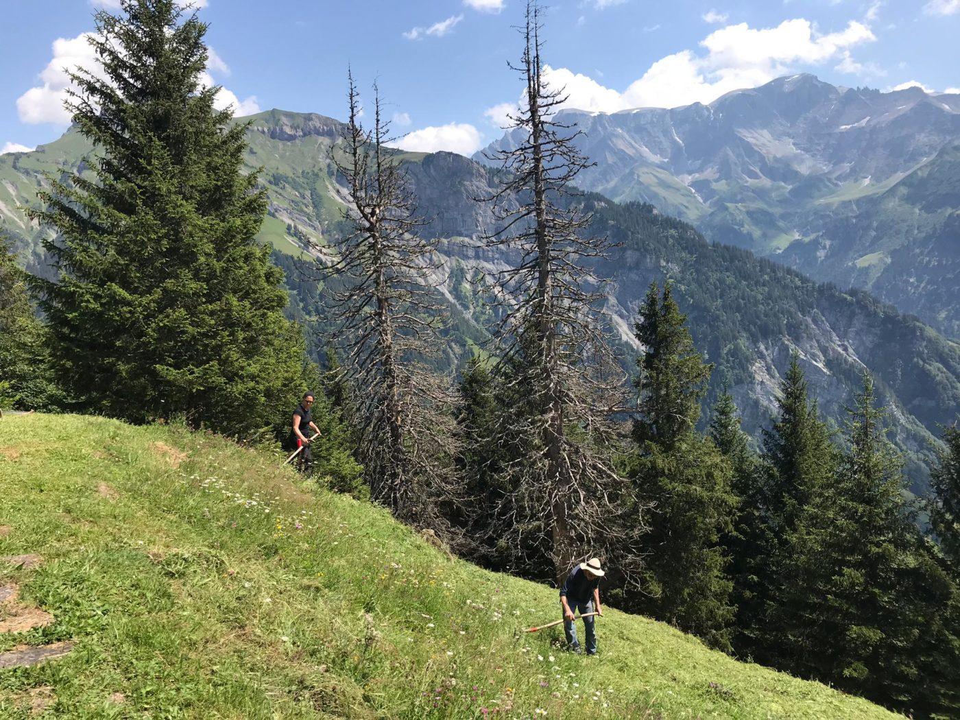 promouvoir la régénération forestière en suisse