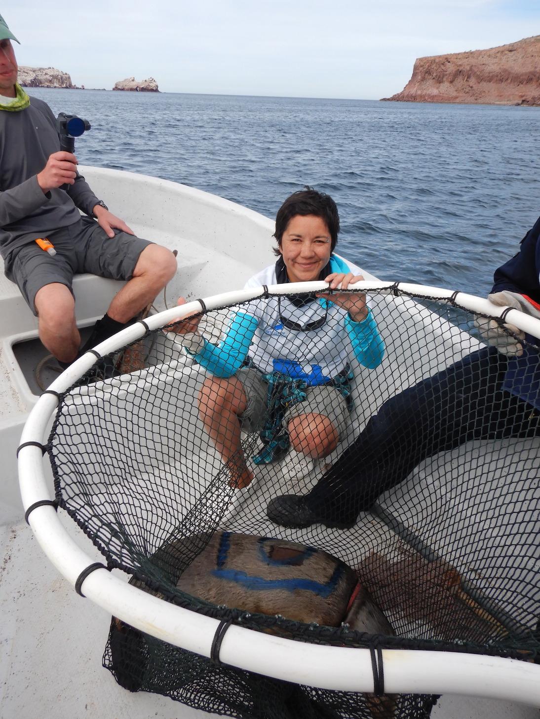 Eréndira Valle Padilla / Cabet Cultura y Ambiente / Protection de l'environnement / sauvegarde des mammifères marins