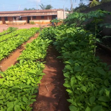 News from the field : Togo