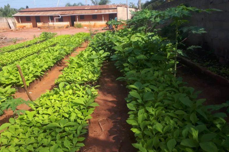 Des nouvelles du terrain : Togo
