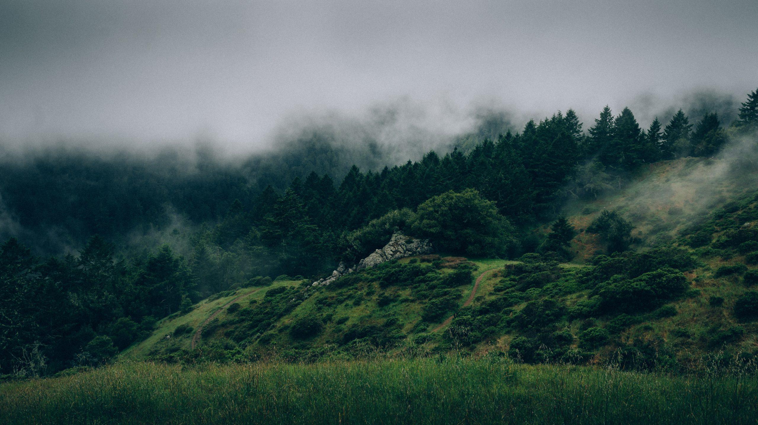 Enjeux Reforestation Echelle Internationale
