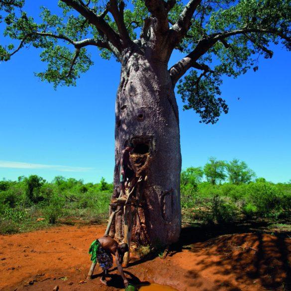 Précieux refuges pour la biodiversité, les arbres protègent aussi les ressources en eau.